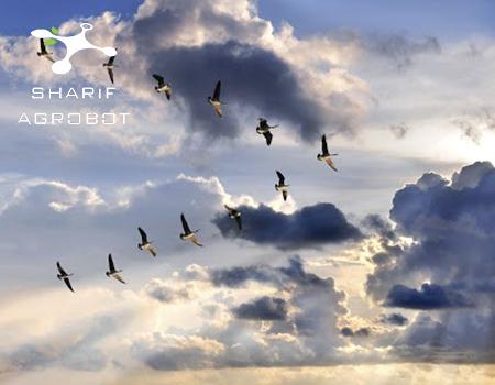 پرواز پرندگان به شکل V